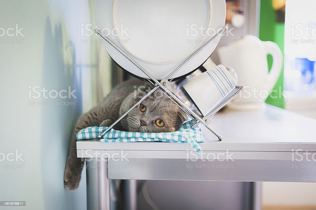 Lazy cat lying under the dish drainer in a kitchen stock photo
