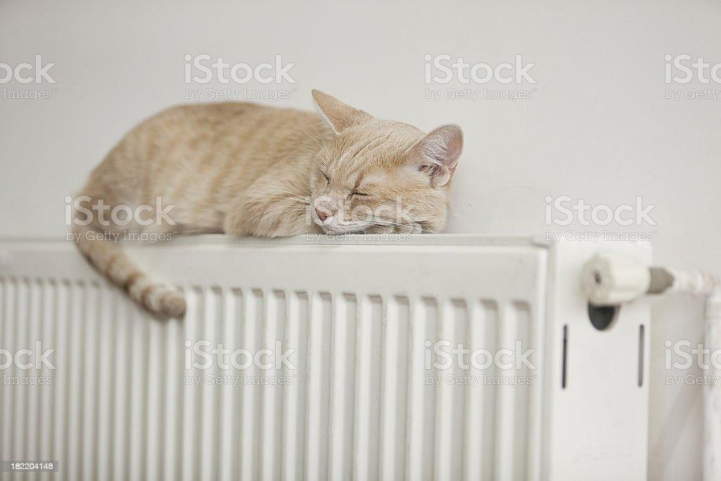 Lazy cat royalty-free stock photo