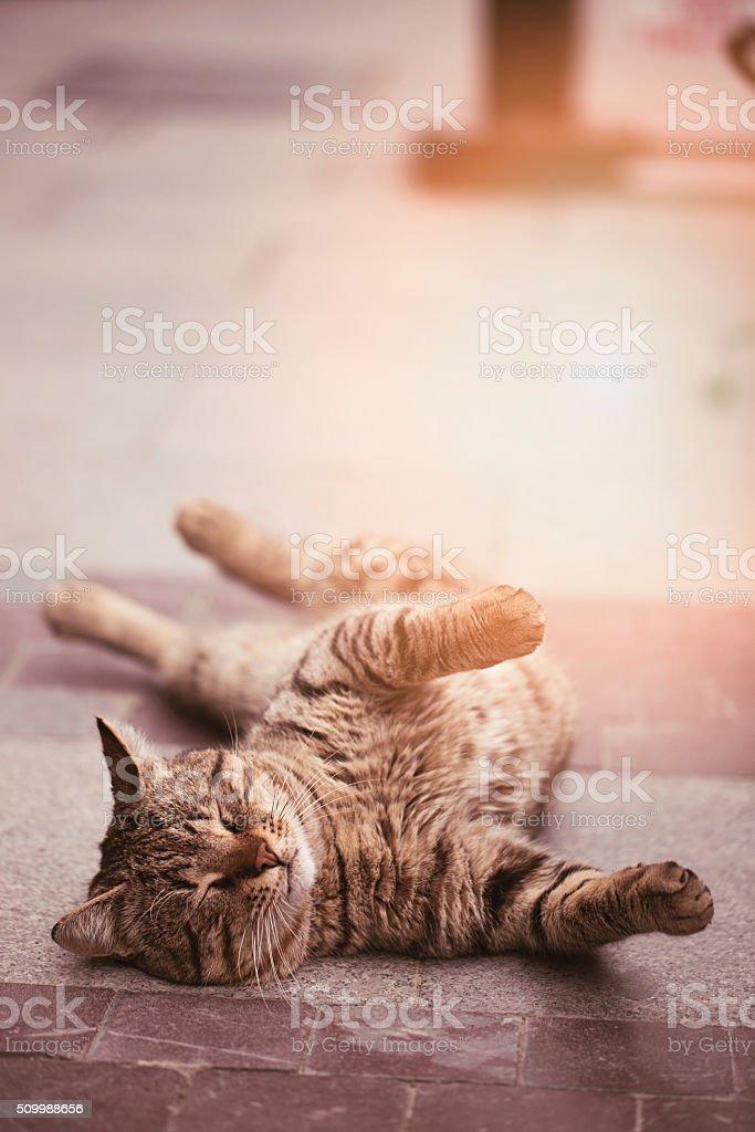 Lazy cat sleeping at street stock photo