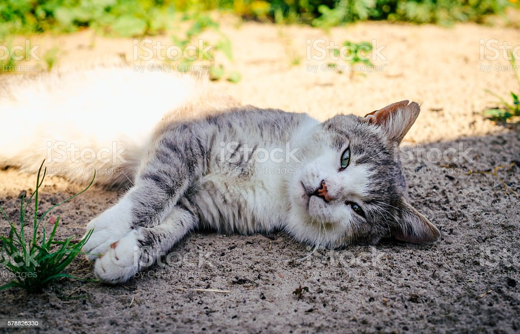 Lazy cat sleeps in the garden stock photo