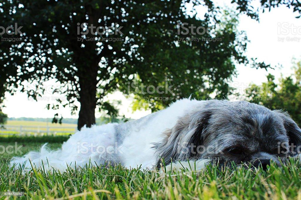 Lazy Day royalty-free stock photo