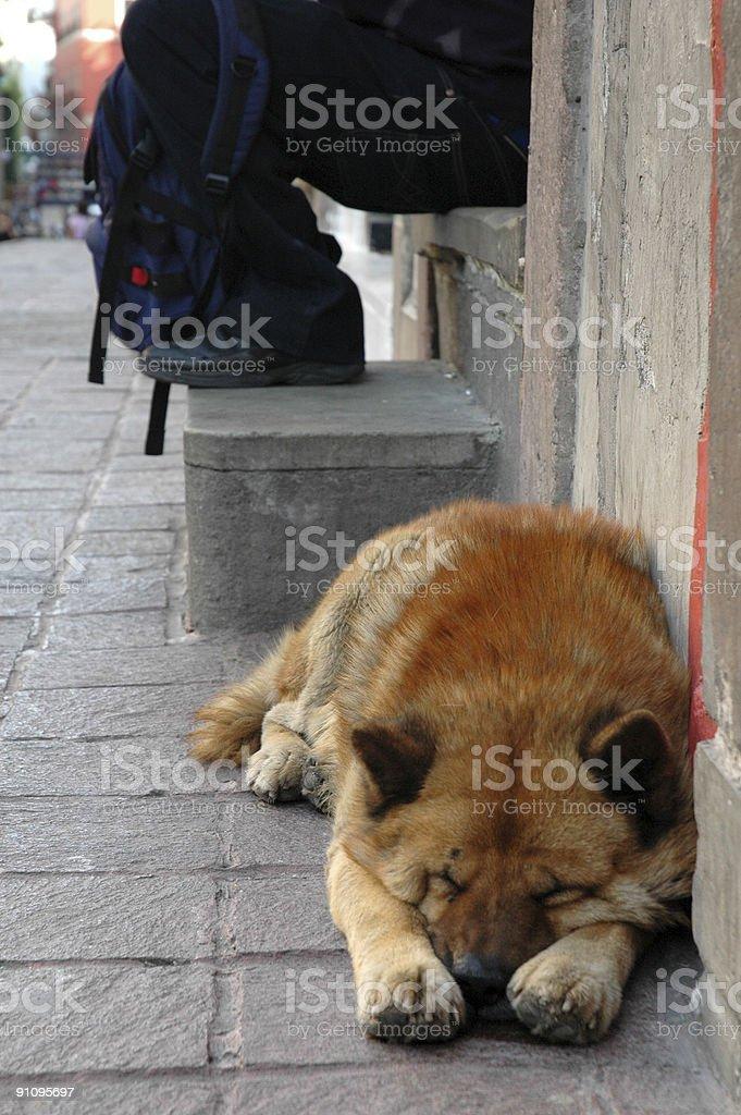 Lazy Dog - Vertical royalty-free stock photo