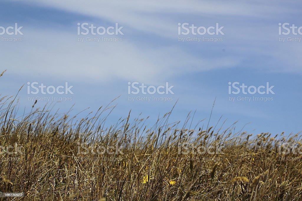 Lazy Field royalty-free stock photo