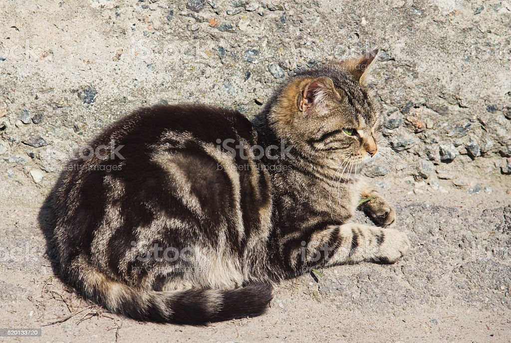 Lazy gray striped cat is sleeping outdoors stock photo