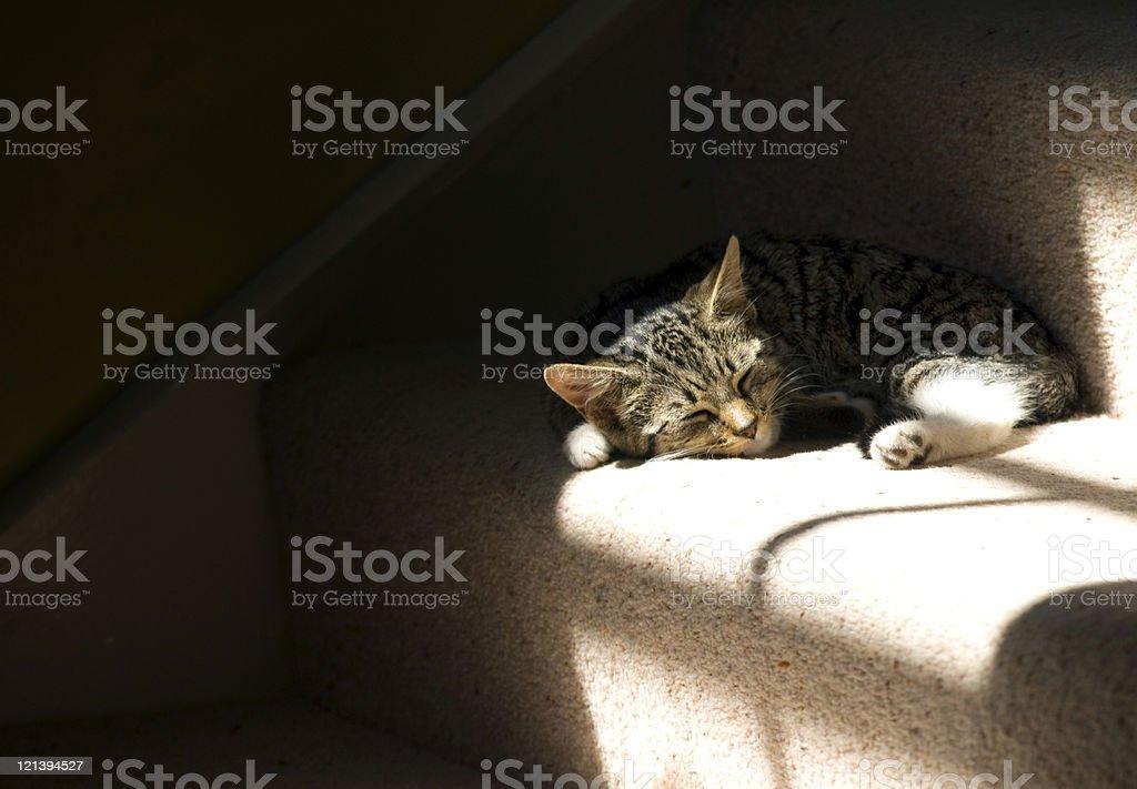 Lazy Kitten royalty-free stock photo