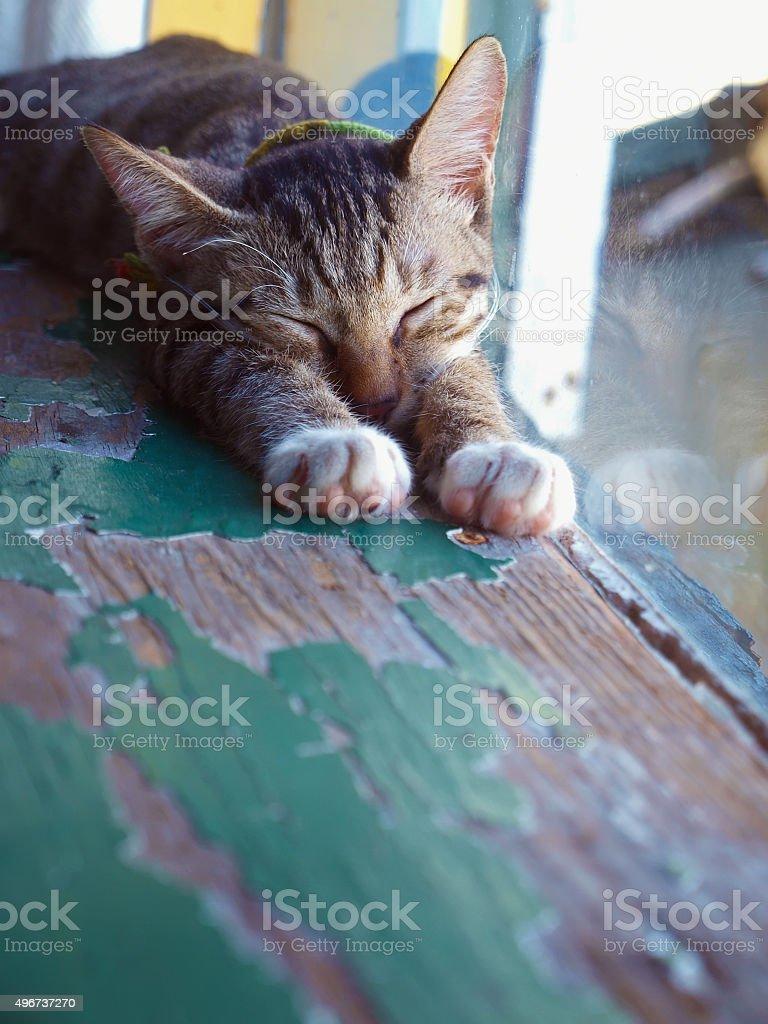 Lazy kitten sleeping next to the window stock photo