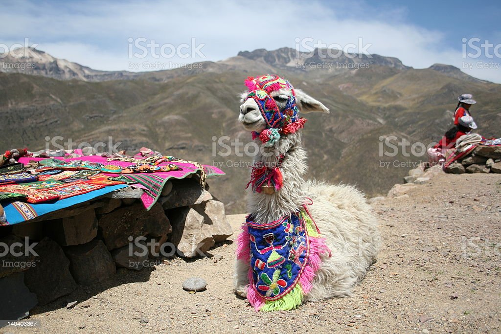 Lazy Llama stock photo