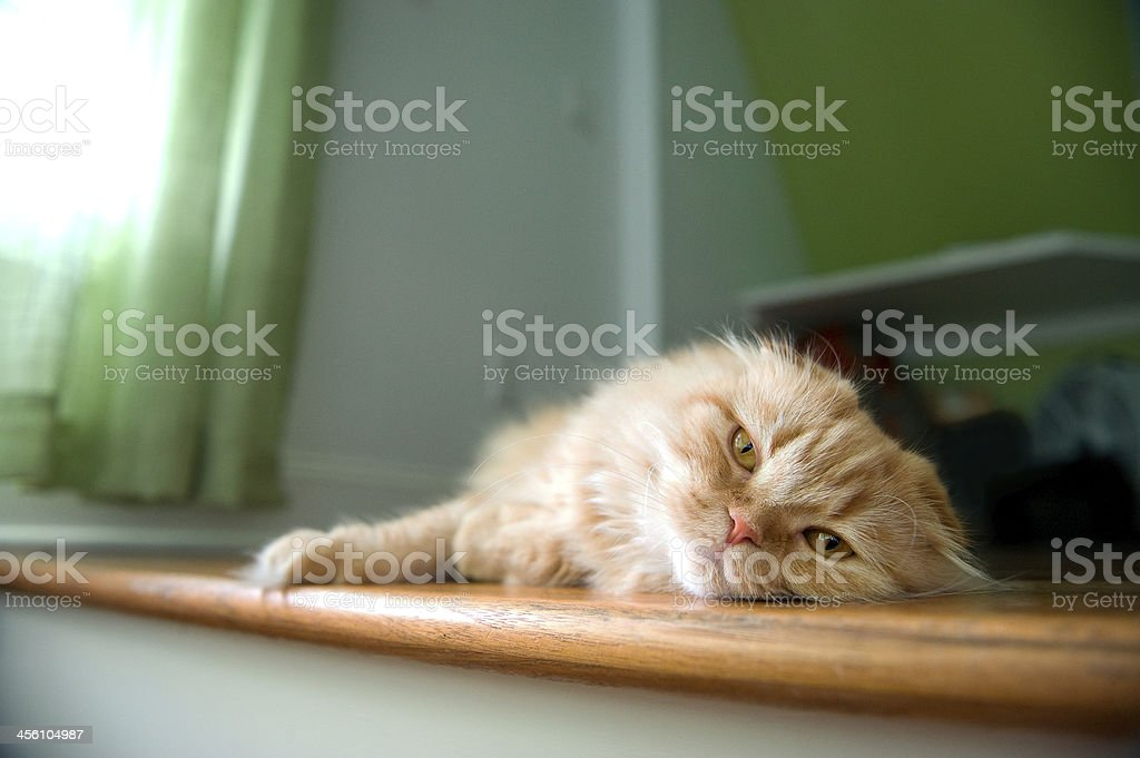 Lazy Orange Cat Taking An Afternoon Nap stock photo