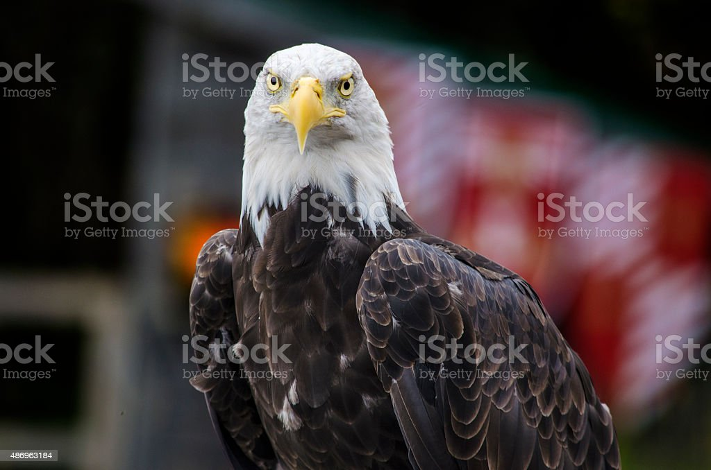 Le regard de l'aigle stock photo