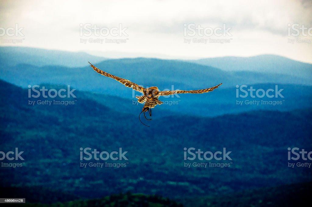 Le vol du rapace stock photo