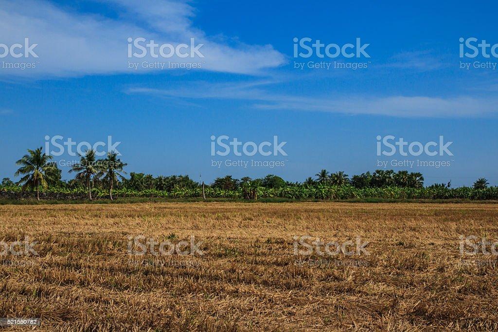 Lea brown under blue sky stock photo