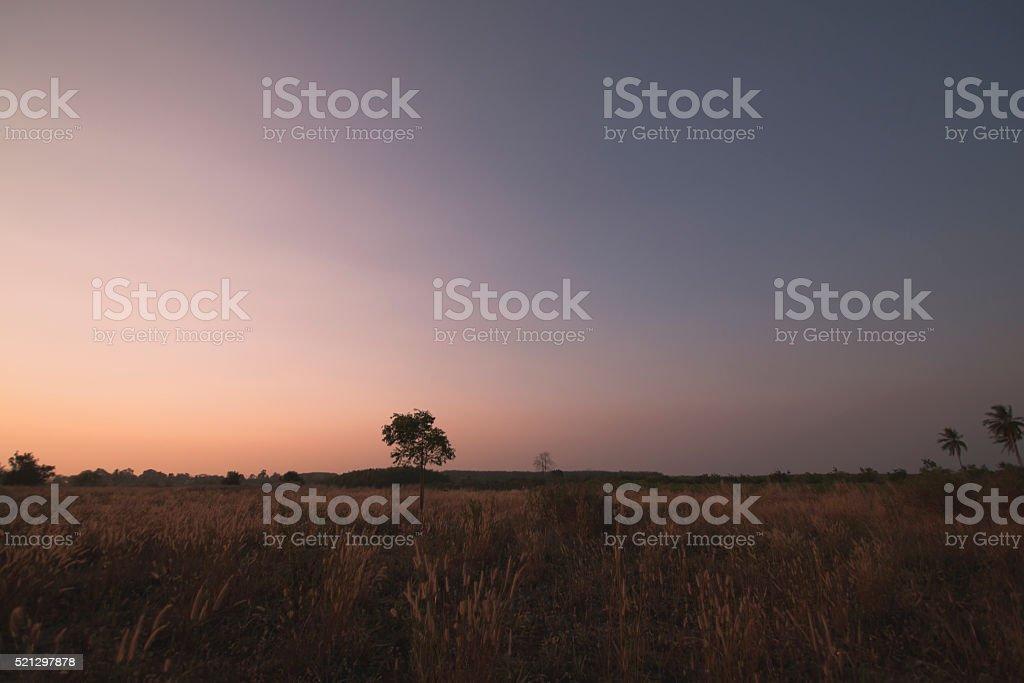 Lea evening stock photo