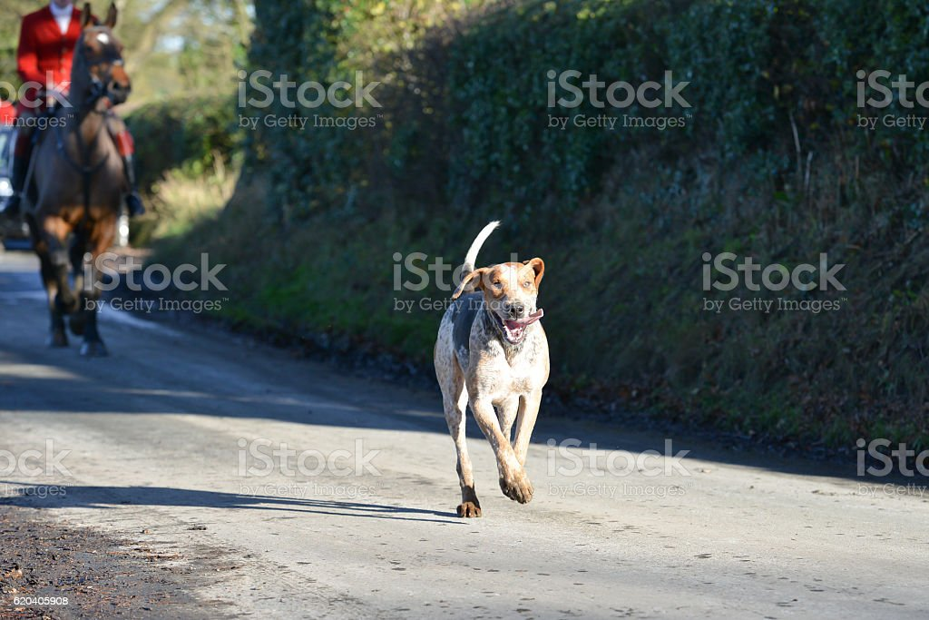 Leader of the pack. stock photo