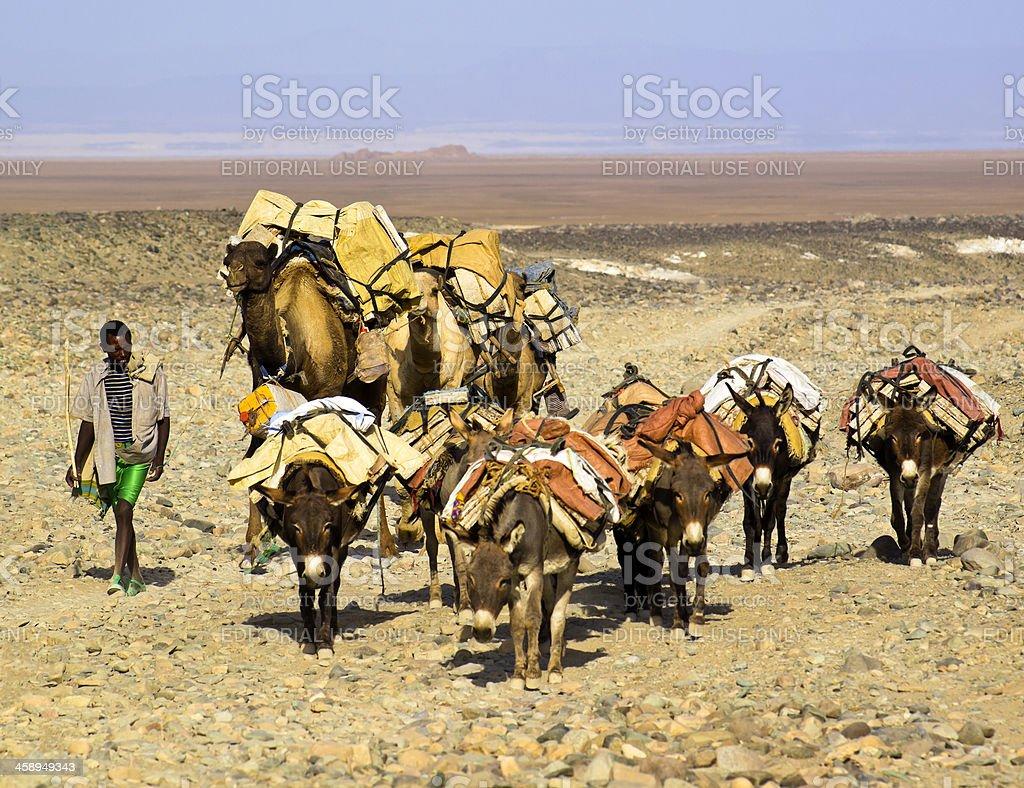 Leading caravan royalty-free stock photo