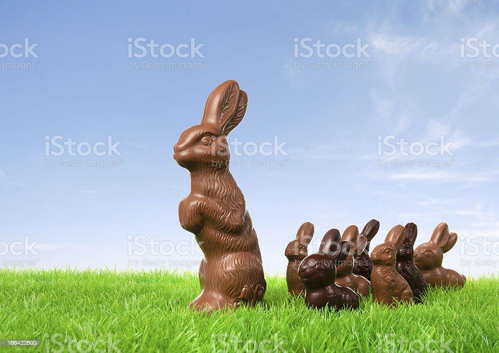 Leading chocolate bunny royalty-free stock photo