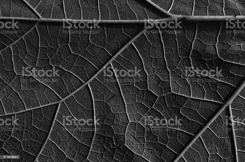 Leaf abstract background and texture stock photo