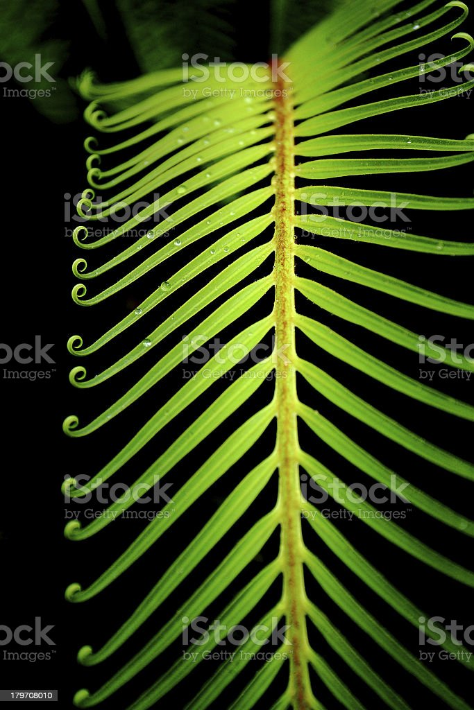 Leaf Abstract royalty-free stock photo