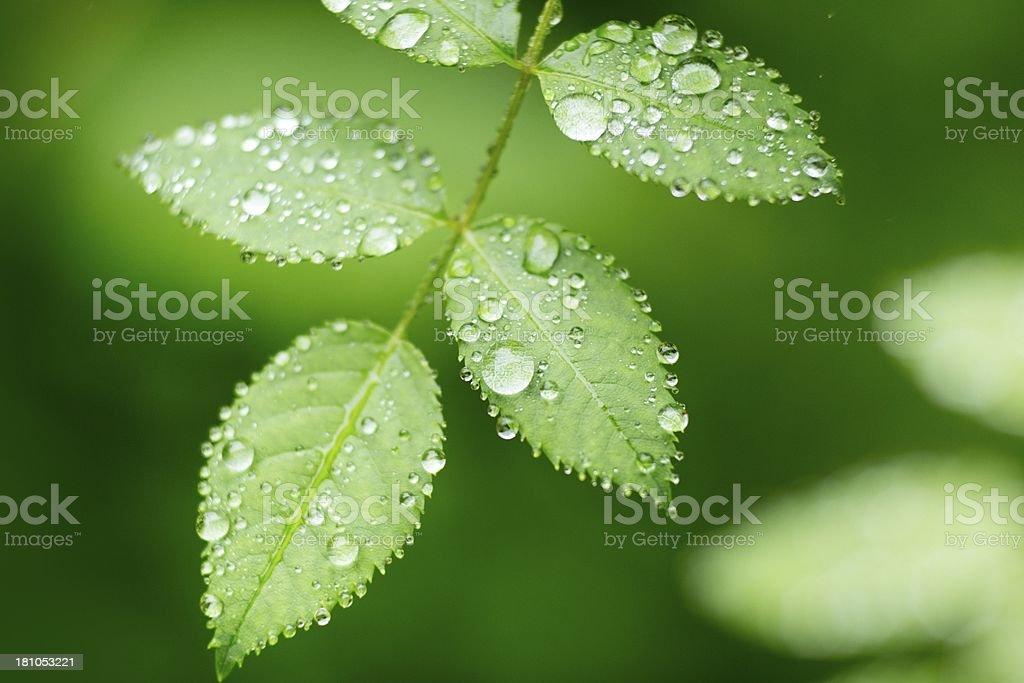 Leaf after rain in sunshine stock photo