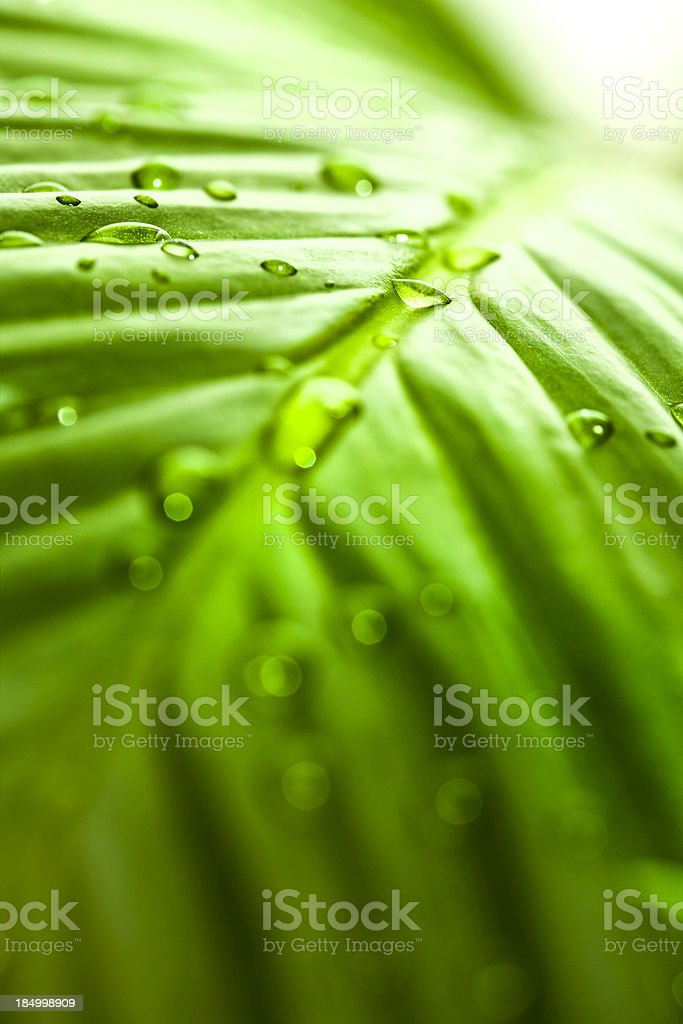 Leaf after rain in sunshine royalty-free stock photo