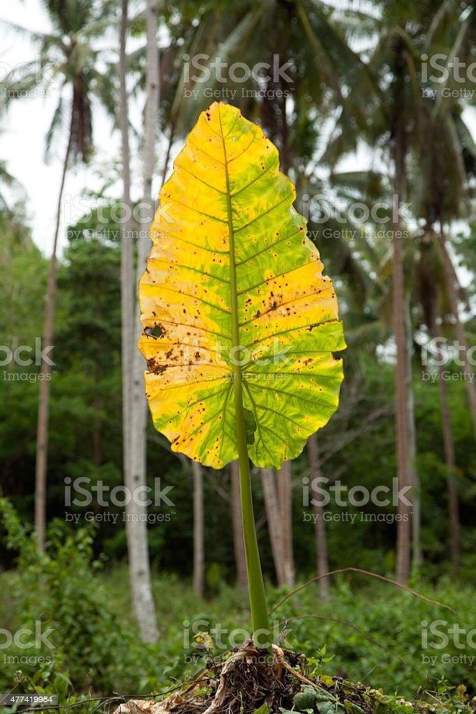 leaf alone ;) stock photo