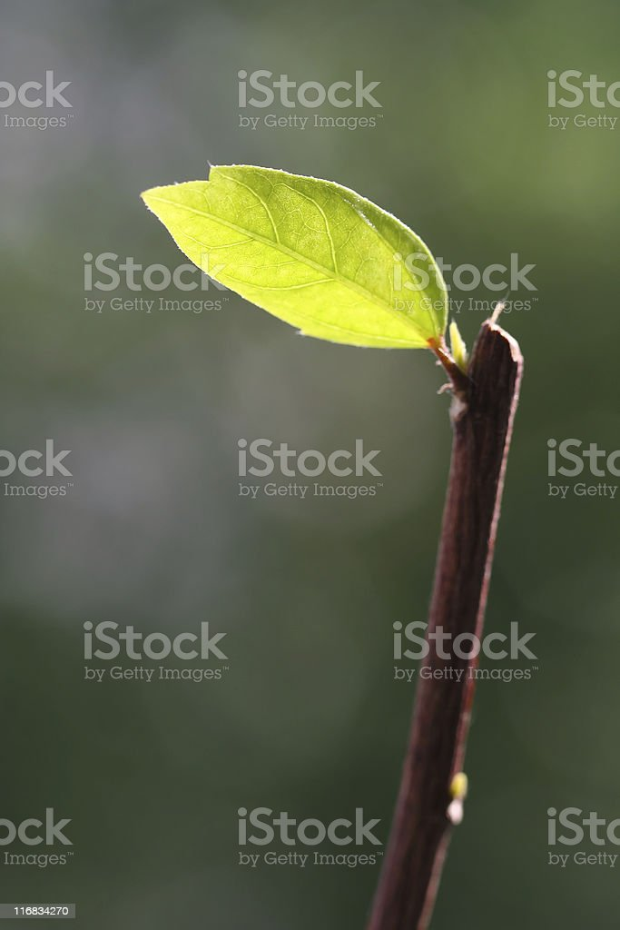 Leaf and branches stock photo
