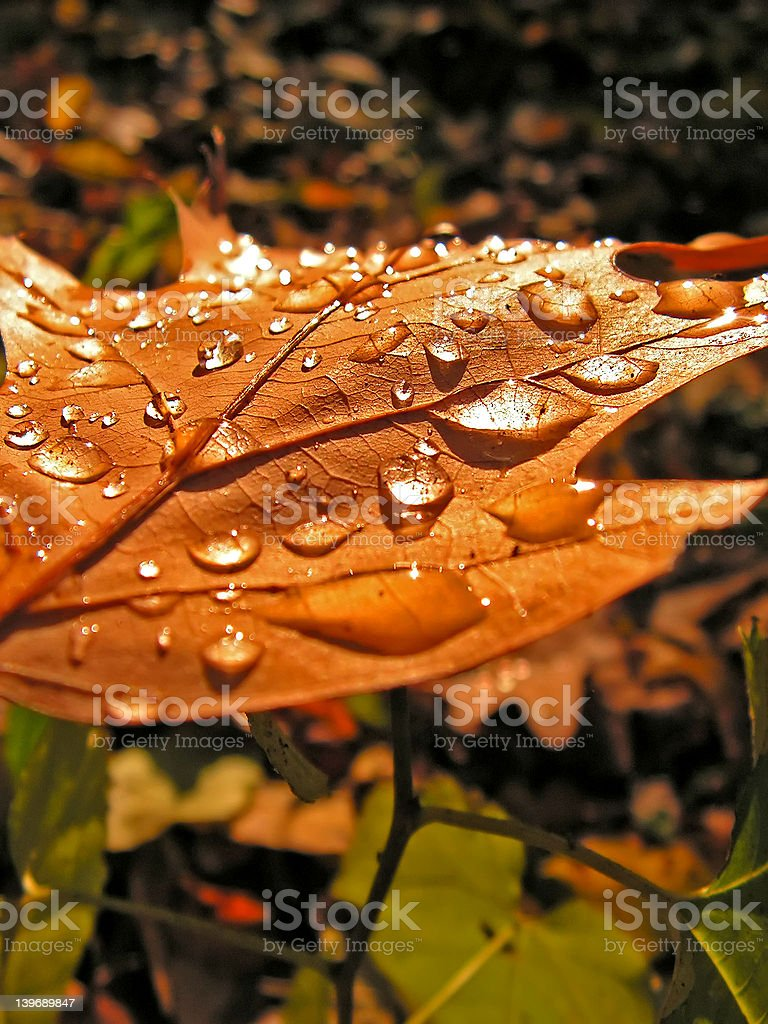 leaf and dew royalty-free stock photo