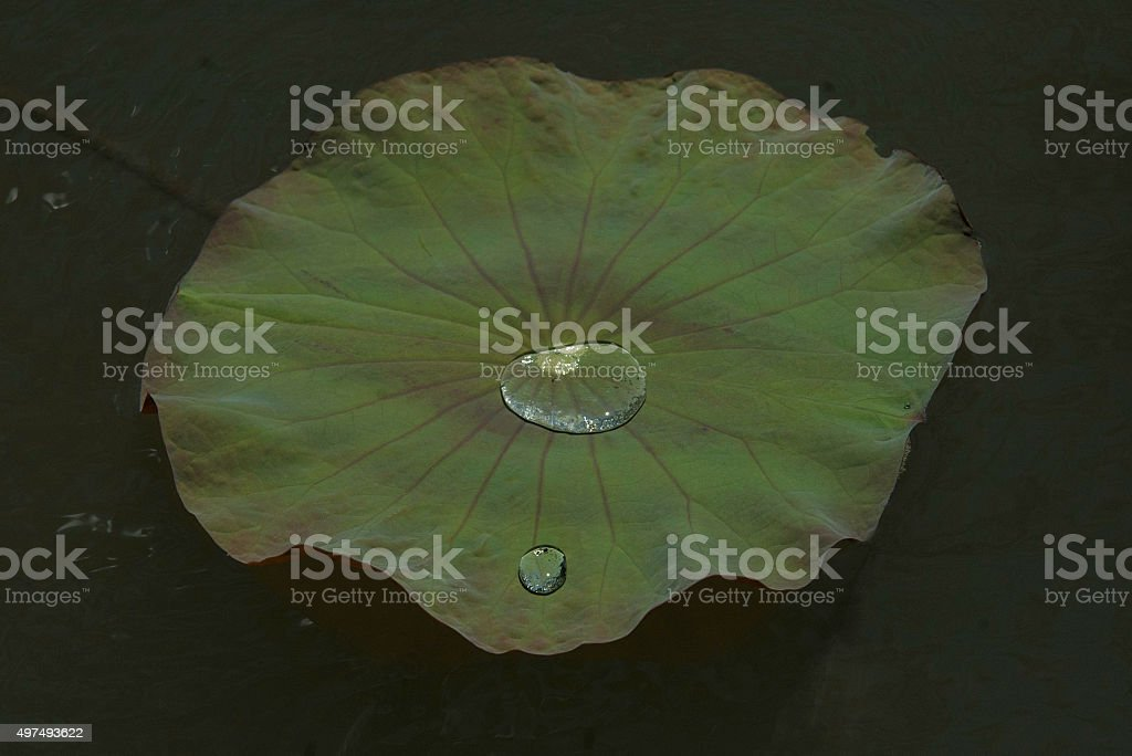 Leaf and drop royalty-free stock photo
