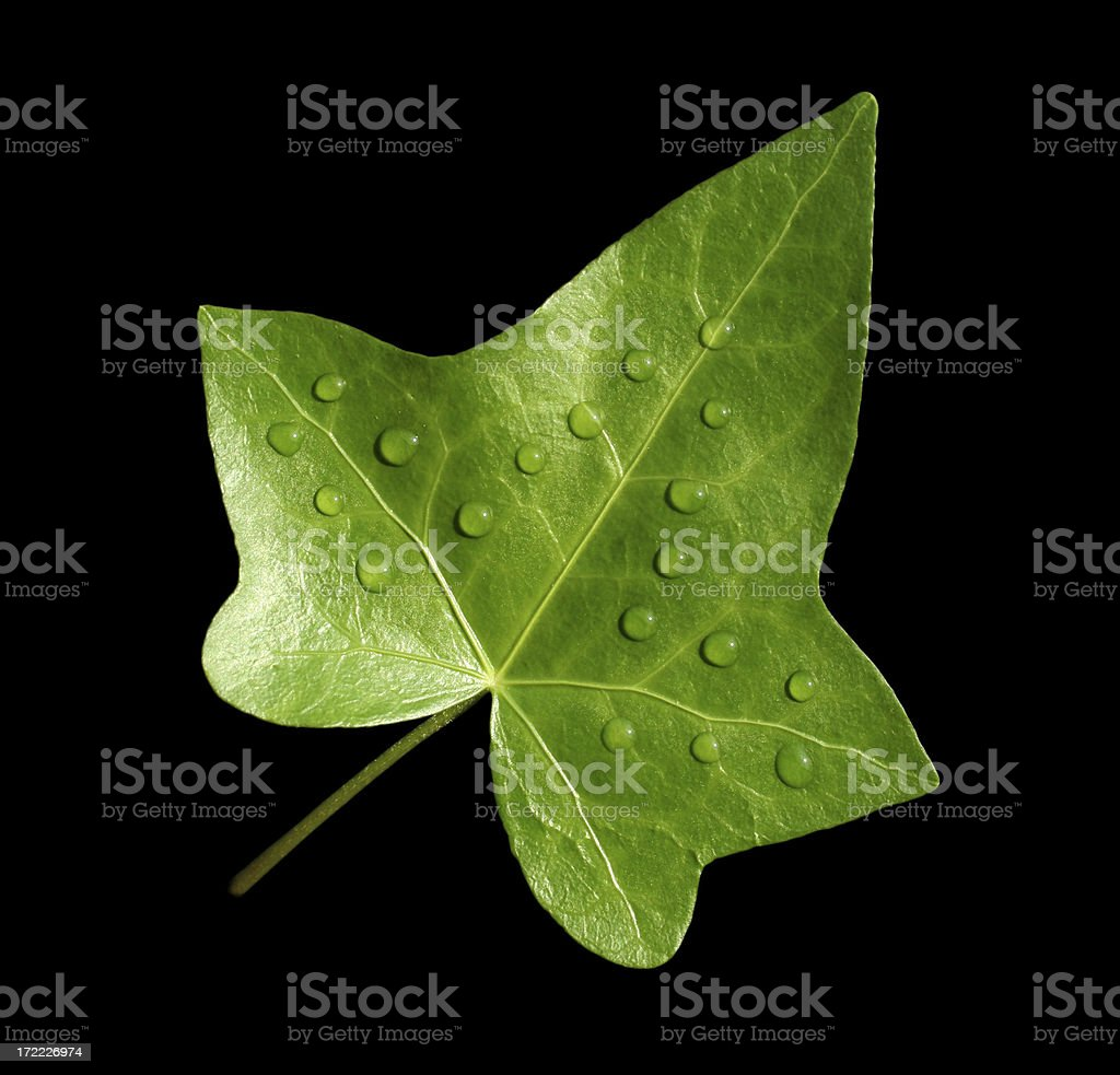 leaf and droplets royalty-free stock photo