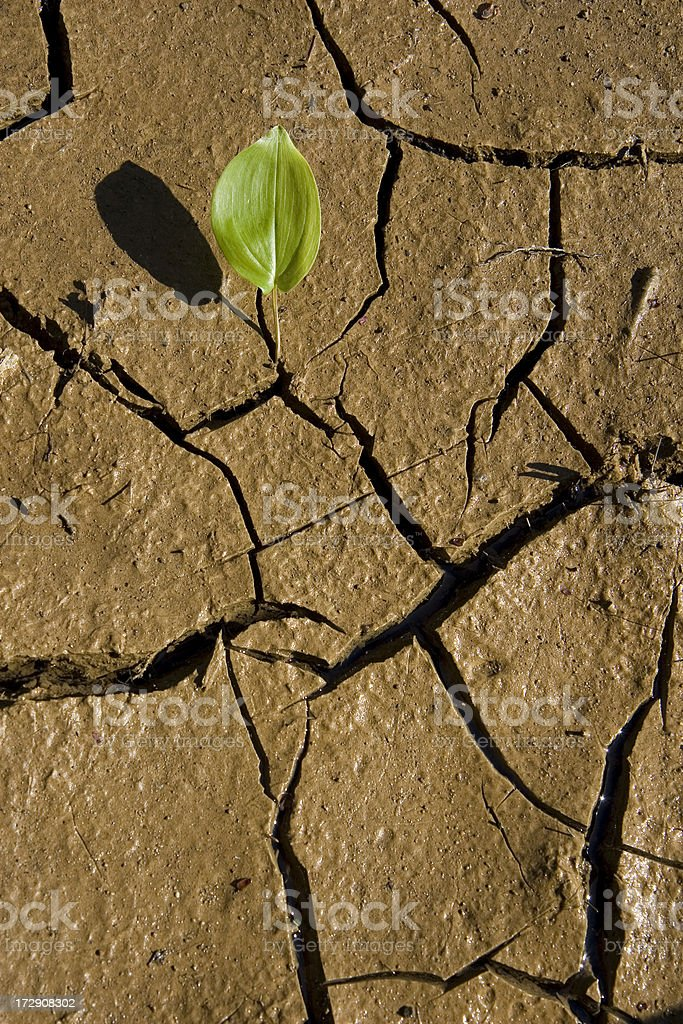 Leaf and Mud royalty-free stock photo