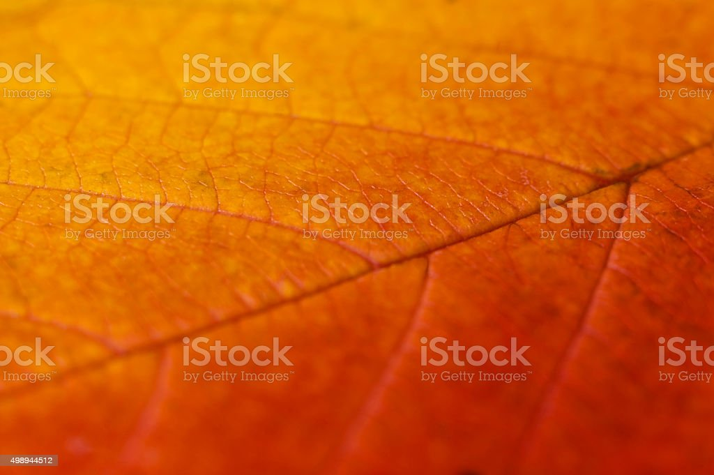 Leaf and Texture stock photo