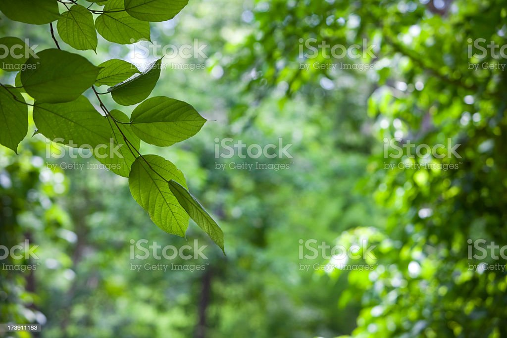 Leaf and tree background. stock photo