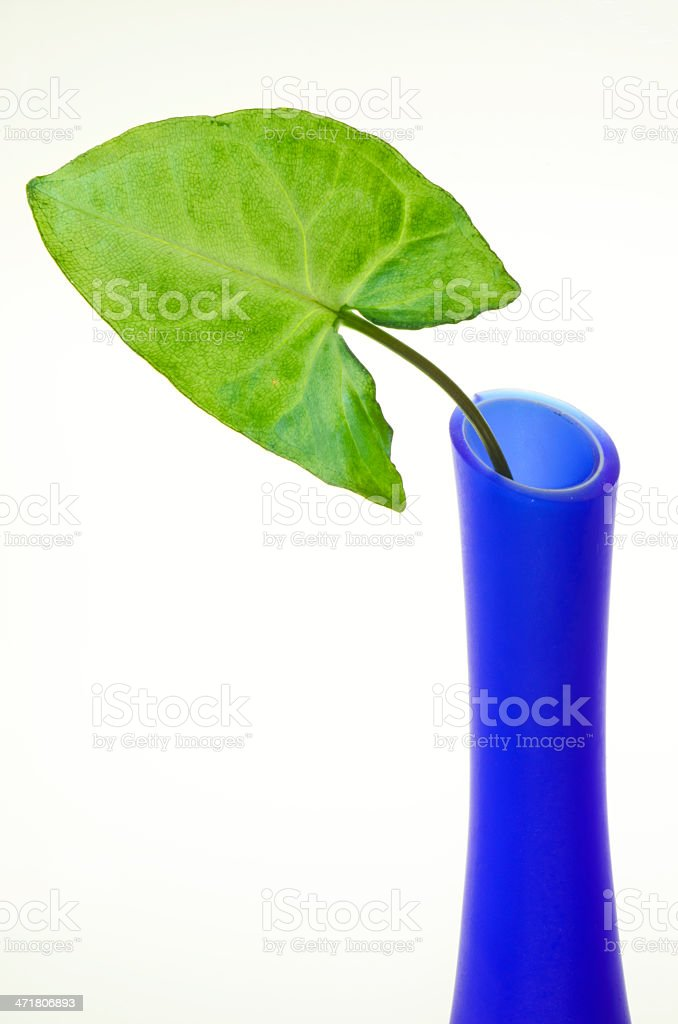 Leaf Arrangement royalty-free stock photo