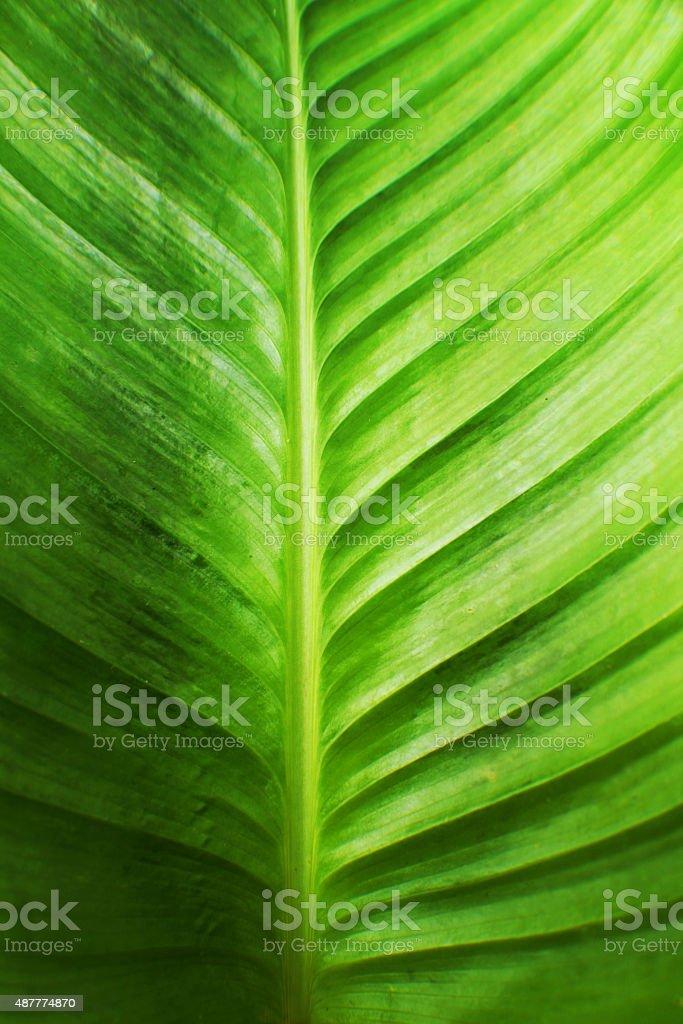 leaf art stock photo