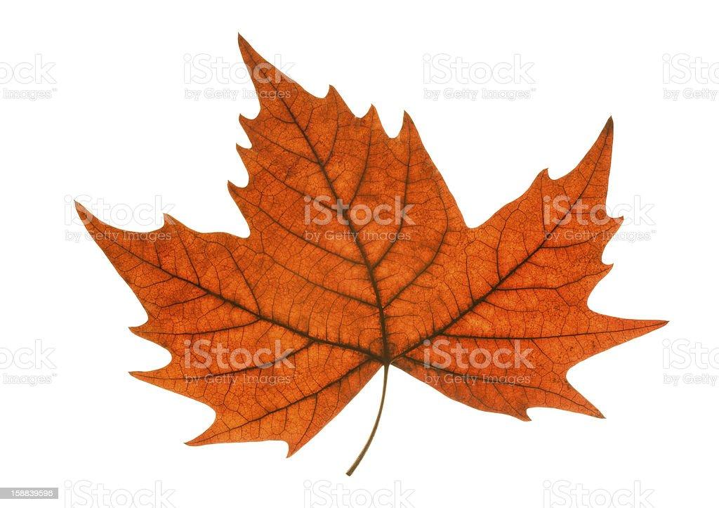 leaf autumn royalty-free stock photo
