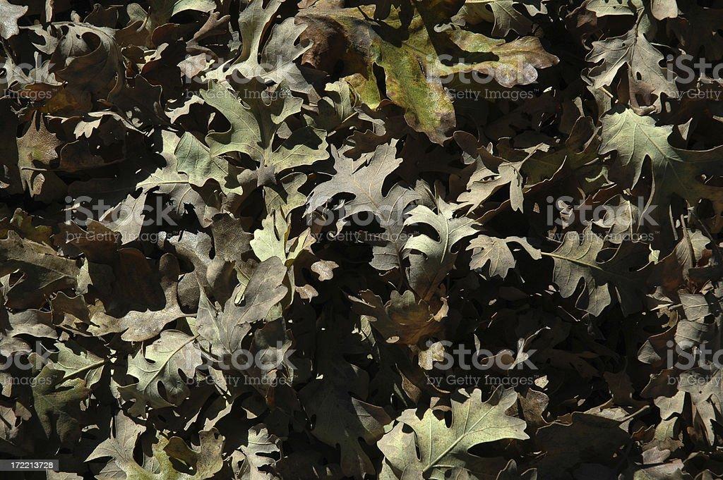Leaf Background 1 stock photo