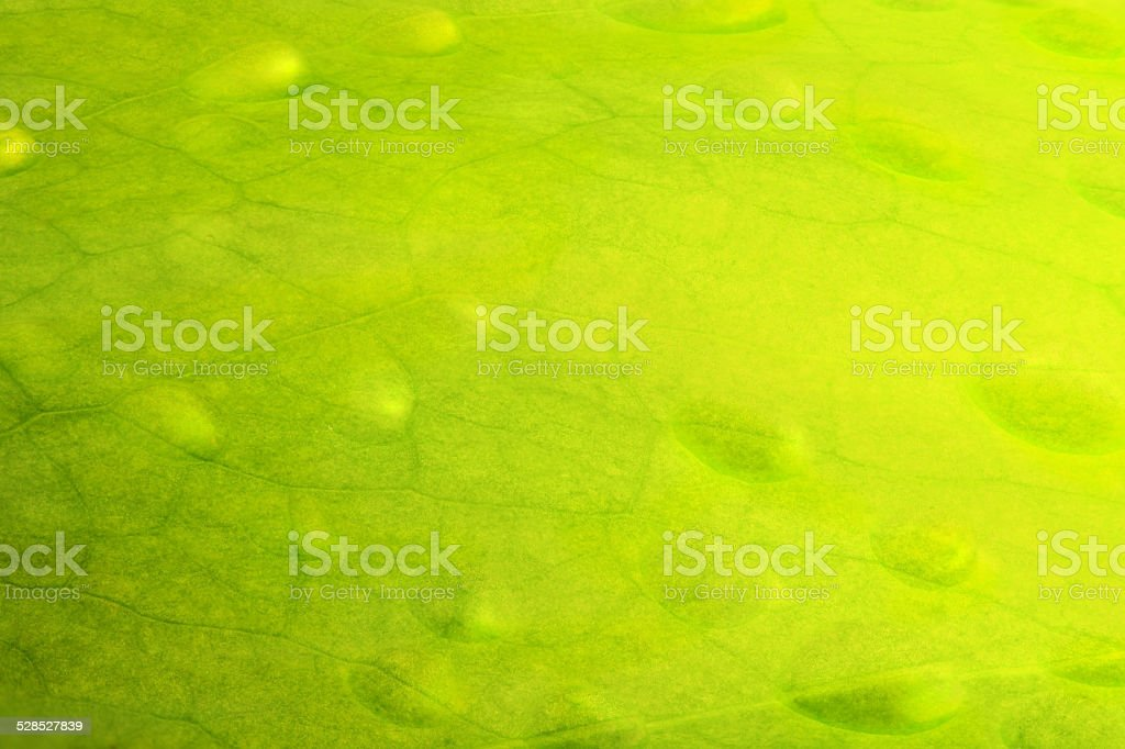 Leaf background.. stock photo
