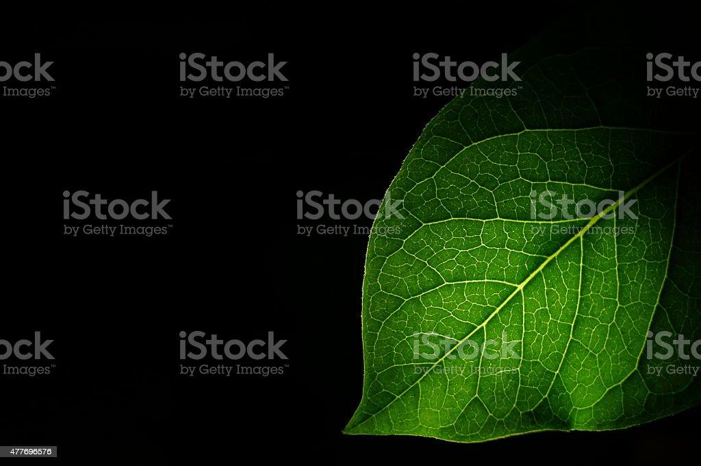 Leaf Bush stock photo