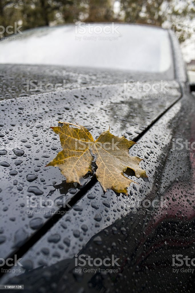 Leaf by the car royalty-free stock photo