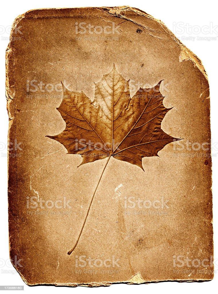 Leaf Card stock photo
