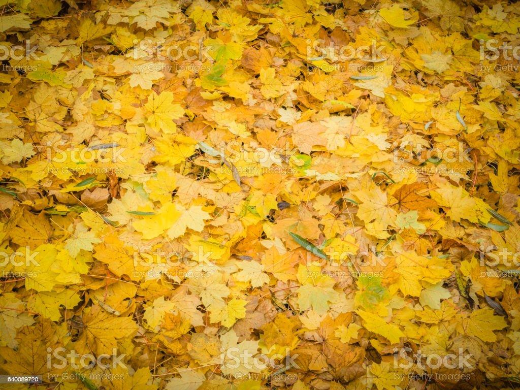 Leaf carpet stock photo