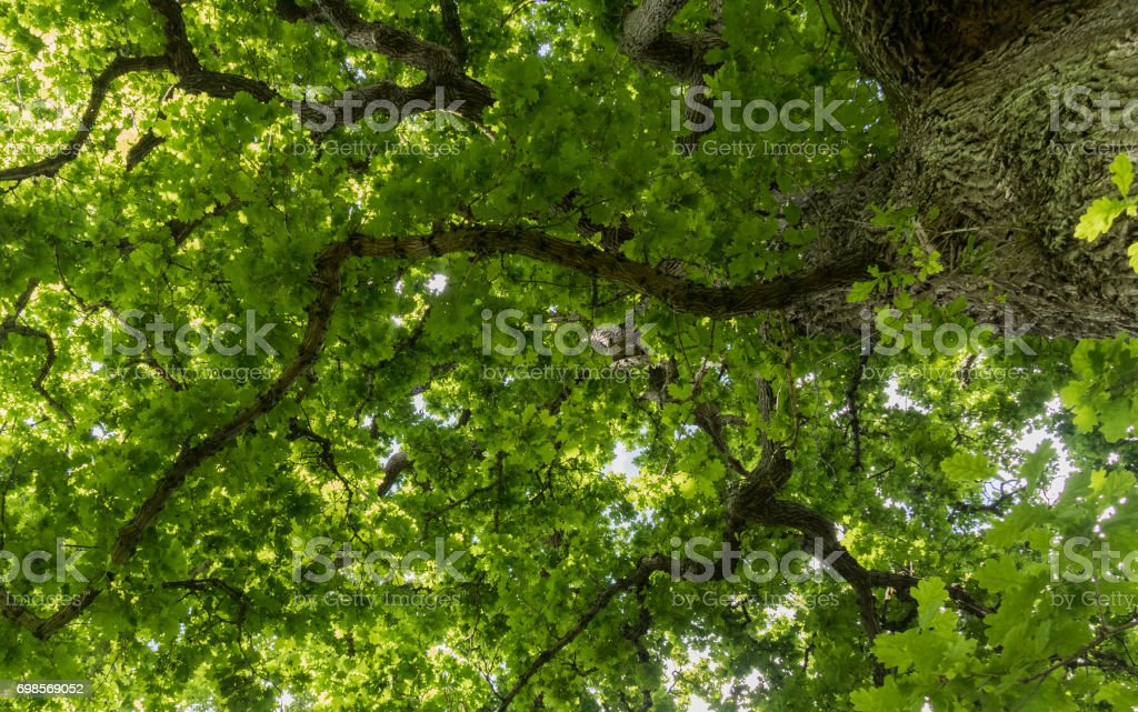 Leaf Ceiling stock photo