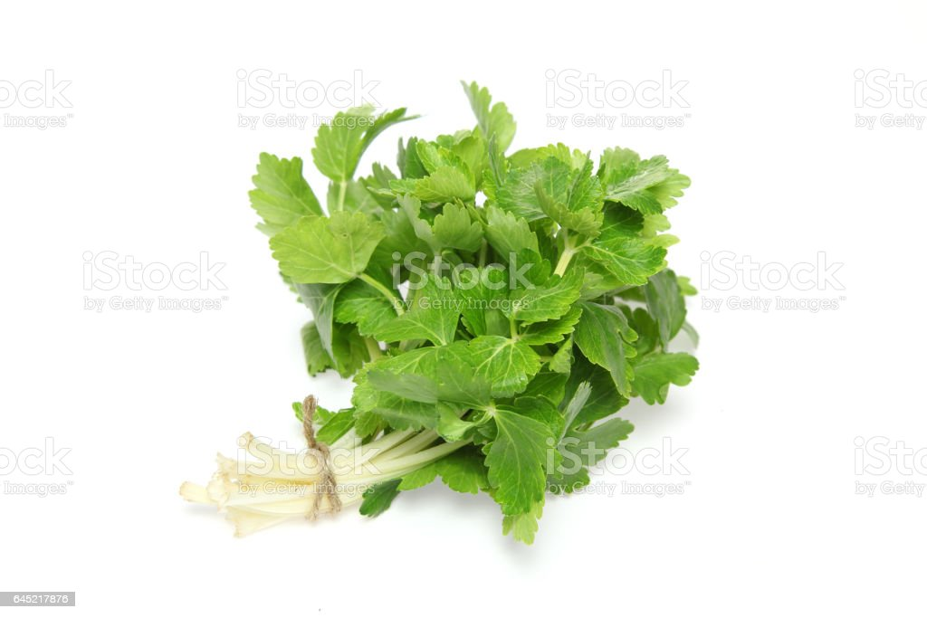 Leaf celery in a white background stock photo