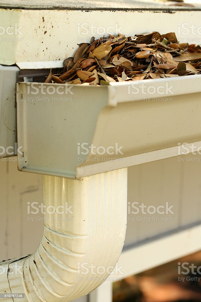 leaf clogged gutter and downspout stock photo