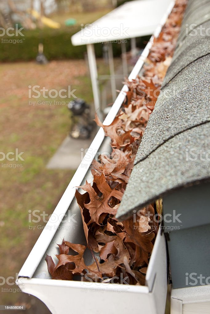 Leaf clogged rain gutter on housefull of brown leafs stock photo