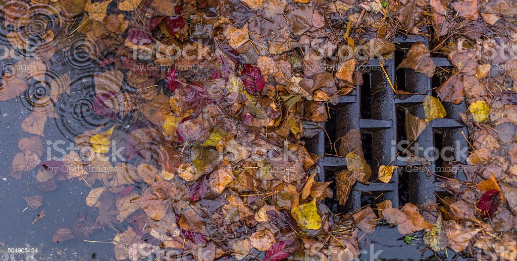 Leaf clogged storm drain stock photo