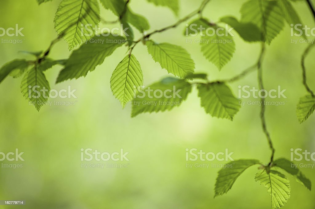 Leaf Close Up on Green Background royalty-free stock photo