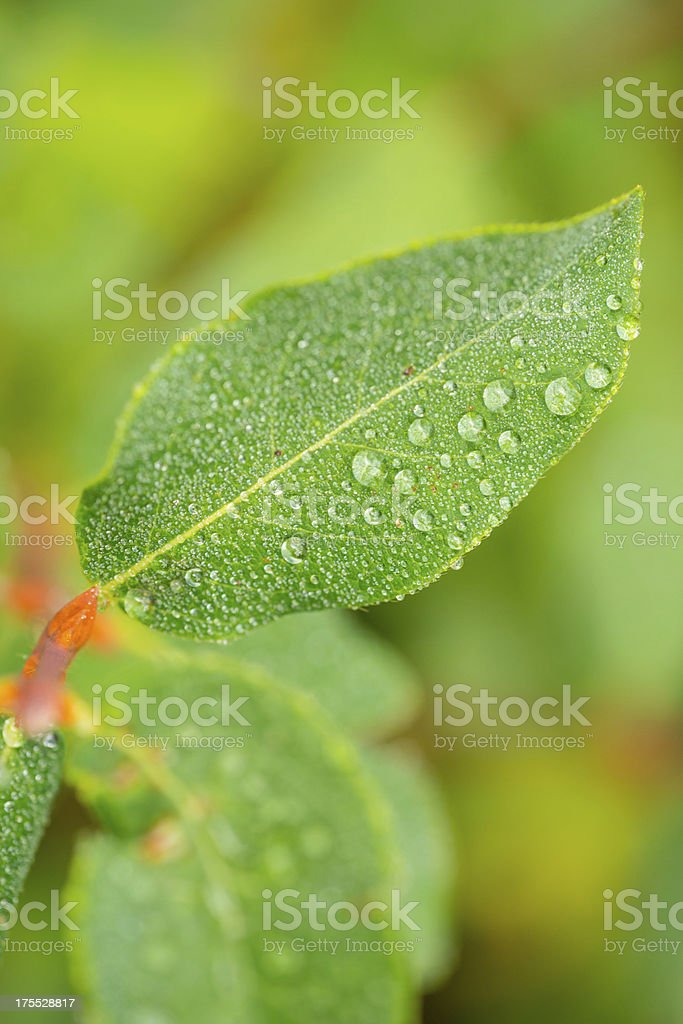 Leaf Close Up with Water Droplets stock photo