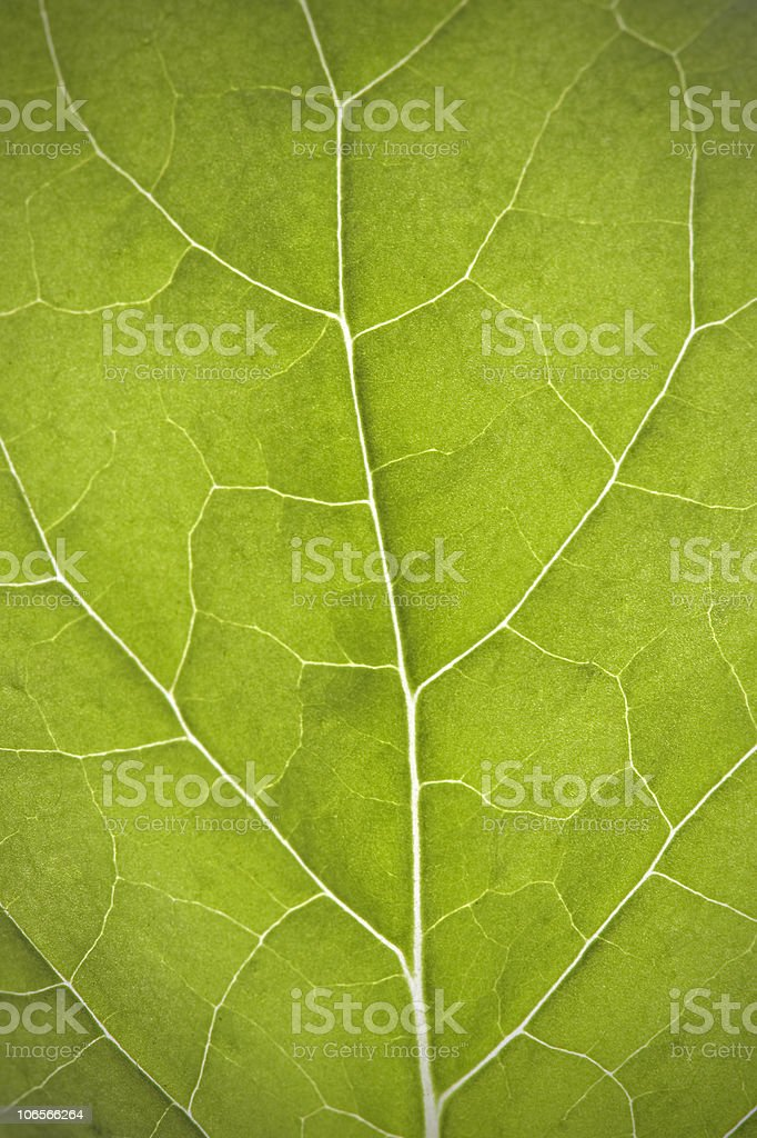 Leaf closeup royalty-free stock photo
