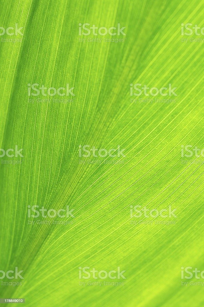 Leaf close-up royalty-free stock photo