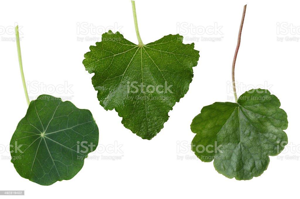 Leaf Colleage stock photo
